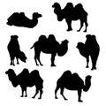 Vector set of camels