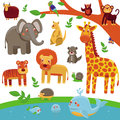 Vector set of cartoon animals funny and cute characters tiger lion giraffe elephant raccoon Royalty Free Stock Images