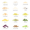Vector set of cereal and grain emblems. For packing groats, kitchen jar prints, advertising healthy food. Royalty Free Stock Photo
