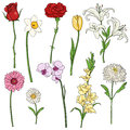 Vector Set of color Cartoon Flowers Royalty Free Stock Photo
