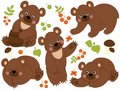 Vector Set of Cute Forest Brown Bears