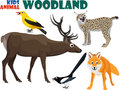 Vector set of cute woodland kids animals