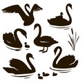Vector set of decorative birds. Swan with nestling. Swan silhouette