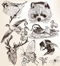 Vector set of detailed hand drawn animals in vintage style collection high for design Royalty Free Stock Photography