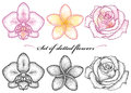 Vector set with dotted flower of Orchid, Plumeria or Frangipani and Rose in black and in color isolated on white background.