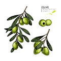 Vector set of hair care ingredients. Organic hand drawn elements. Farm market vegetables. Colored green olive branches.