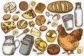 Vector set of hand drawn colored milk, cheese, chicken, eggs, buns and bread, honey