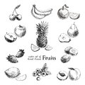 Vector set of hand drawn vintage fruits and