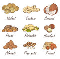 Vector set of hand sketched nuts on white background in hand drawn style: hazelnut, almonds, peanuts, walnut, cashew, pine nut