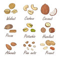 Vector set of hand sketched nuts on white background in hand drawn style: hazelnut, almonds, peanuts Royalty Free Stock Photo
