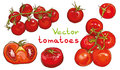 Vector set. Illustration of cherry tomatoes and tomatoes. Royalty Free Stock Photo