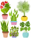 Vector set indoor house plant in pot. Flamingo lily, lucky bamboo, Areca palm, Snake plant, English Ivy, Monstera.