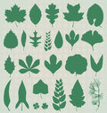 Vector set leaf silhouettes collection of in natural green tone Royalty Free Stock Image
