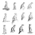 The vector set of meerkat in many poses Royalty Free Stock Images