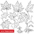 Vector set with outline Acer or Maple ornate leaves, fruit or samara and flower bunch in black isolated on white background.