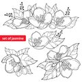 Vector set with outline Jasmine flower bunch, bud and ornate leaves in black isolated on white background. Ornate Jasmine floral.