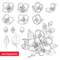 Vector set with outline Jasmine flowers, bud and leaves in black isolated on white background. Floral elements for spring design. Royalty Free Stock Photo