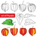 Vector set with outline Physalis or Cape gooseberry or Ground cherry fruit, leaf and berry isolated on white background.