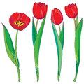 Vector set with outline red tulips flowers and green leaves isolated on white. Template with floral elements for spring design.