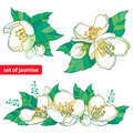Vector set with outline white Jasmine bunch, bud and green leaves isolated on white background. Floral elements for spring design. Royalty Free Stock Photo