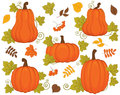 Vector Set with Pumpkins, Berries and Leaves. Vector Halloween and Thanksgiving Day. Pumpkin Vector Illustration. Royalty Free Stock Photo