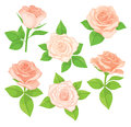 Vector set of realistic, detailed, isolated Rose buds in peach color with green leaves