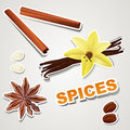 Vector set stikers : spice Royalty Free Stock Photo