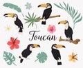 Vector set of toucan birds on tropical branches with leaves and flowers. Vector set of tropical leaves. Palm, monstera, banana