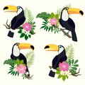 Vector set with toucan