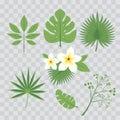 Vector set of tropical leaves. Palm leaf, banana leaf, hibiscus, plumeria flowers. Jungle trees.Botanical floral illustration. Set