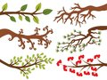 Vector Set of Various Tree Branches. Tree Branches Vector Illustration