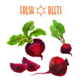 Vector set of watercolor beets elements on white background. Royalty Free Stock Photo