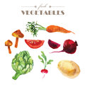 Vector set of watercolor fresh vegetables on white background.