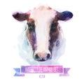Vector set of watercolor illustrations. Cute cow