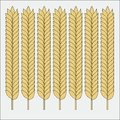 Vector set of wheat ears. Sketch of cereal for bakery and other design Royalty Free Stock Photo