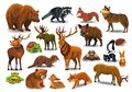 Vector set of wild forest animals like stag, bear, wolf, fox, tortoise