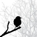Vector  silhouette of the bird Royalty Free Stock Images