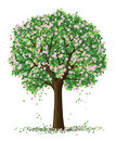 Vector silhouette spring tree Stock Photo
