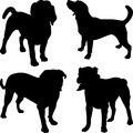Vector silhouettes of dogs in the rack set beagle mastiff central asian shepherd breed Royalty Free Stock Photography