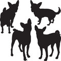 Vector silhouettes of dogs in the rack set chihuahua basenji breed Royalty Free Stock Photography