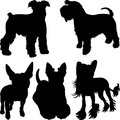Vector silhouettes of terrier dogs in the rack set schnauzer scottish bull chinese crested breed Stock Photo