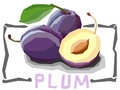 Vector simple illustration of fruit plums. Royalty Free Stock Photo