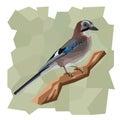 Vector simple illustration of jay bird. Royalty Free Stock Photo
