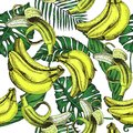 Vector sketch background fruit. Illustration banana and extic leafs pattern.