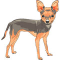 Vector sketch dog chihuahua breed smiling color of the cute Royalty Free Stock Image