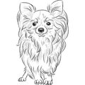 Vector sketch dog chihuahua breed smiling grayscale of the cute Royalty Free Stock Photo