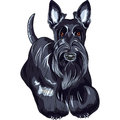 Vector sketch dog Scottish Terrier breed standing