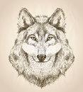 Vector sketch illustration of a wolf head front view. Royalty Free Stock Photo