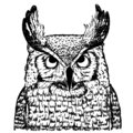 stock image of  Vector sketch of owl on white background. Realistic illustration of bird