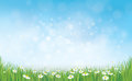 Vector sky background with grass and chamomiles. Royalty Free Stock Photo